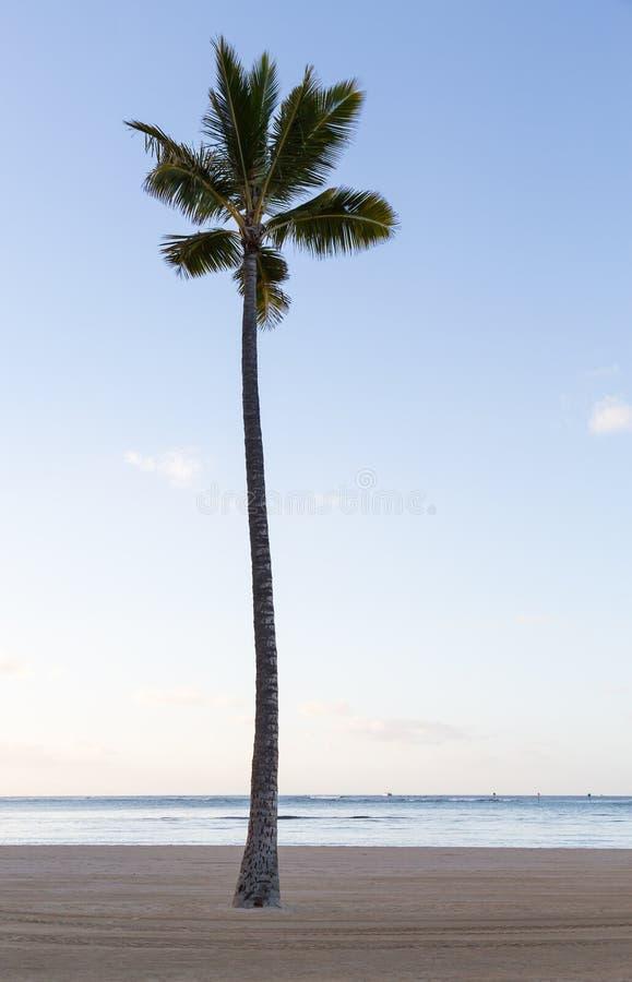Ενιαίος ευθύς φοίνικας στην αμμώδη παραλία στοκ φωτογραφίες με δικαίωμα ελεύθερης χρήσης