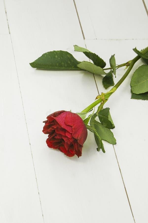 Ενιαίος κόκκινος αυξήθηκε άσπρα floorboards στοκ φωτογραφίες