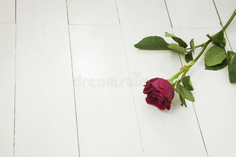 Ενιαίος κόκκινος αυξήθηκε άσπρα floorboards στοκ εικόνες με δικαίωμα ελεύθερης χρήσης