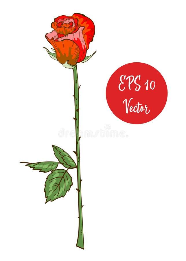 Ενιαίος κόκκινος αυξήθηκε διανυσματική απεικόνιση λουλουδιών, ο όμορφος κόκκινος βαλεντίνος αυξήθηκε στο μακροχρόνιο μίσχο που απ διανυσματική απεικόνιση