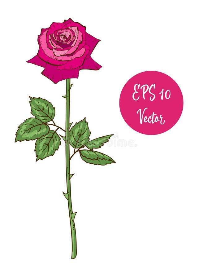 Ενιαίος ρόδινος αυξήθηκε διανυσματική απεικόνιση λουλουδιών, ο όμορφος βαλεντίνος αυξήθηκε στο μακροχρόνιο μίσχο που απομονώθηκε  απεικόνιση αποθεμάτων