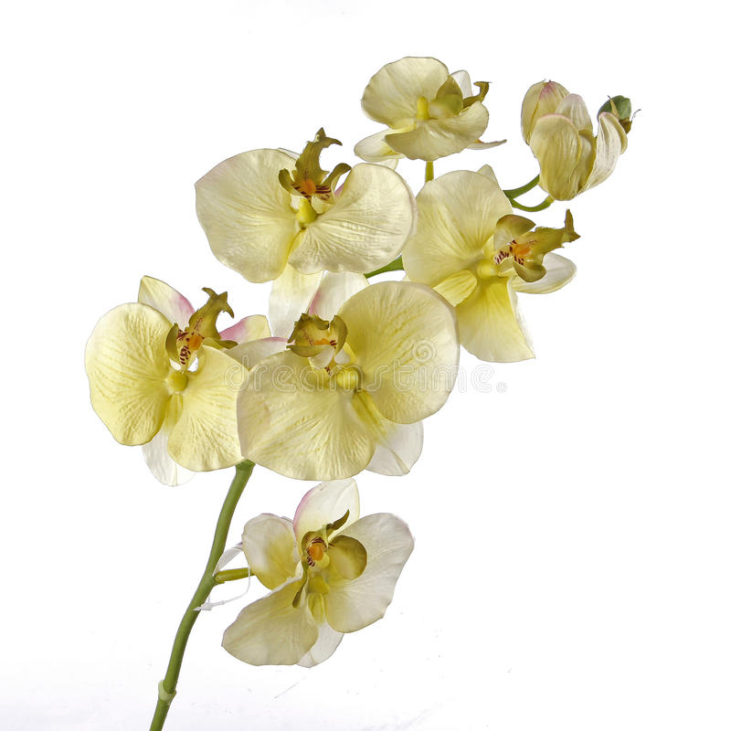 Ενιαίο άσπρο Orchid που απομονώνεται στην άσπρη ανασκόπηση στοκ φωτογραφίες με δικαίωμα ελεύθερης χρήσης