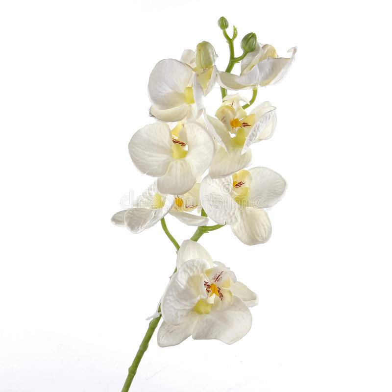 Ενιαίο άσπρο Orchid που απομονώνεται στην άσπρη ανασκόπηση στοκ φωτογραφίες