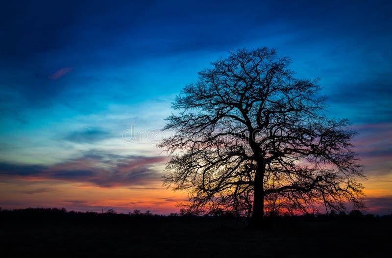 Ενιαίο δέντρο μετά από το ηλιοβασίλεμα στοκ φωτογραφία με δικαίωμα ελεύθερης χρήσης