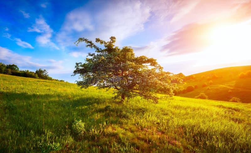 Ενιαίο ανθίζοντας δέντρο στο λόφο και ουρανός πρωινού στο βουνό στοκ φωτογραφία