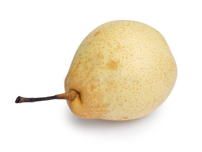Ενιαίο αχλάδι nashi στοκ εικόνα