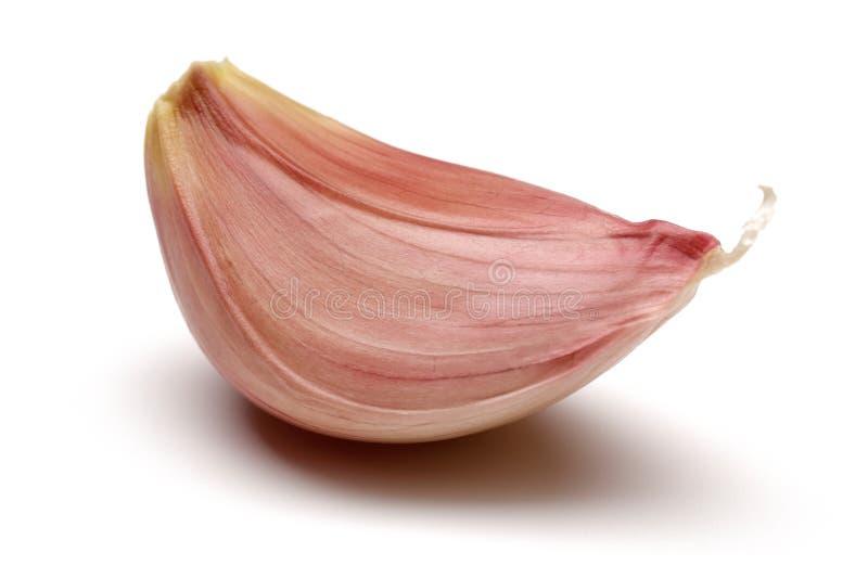 Ενιαίο γαρίφαλο σκόρδου που απομονώνεται στο λευκό στοκ εικόνες με δικαίωμα ελεύθερης χρήσης