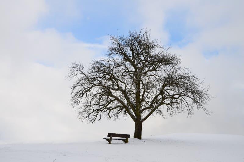 Ενιαίο δέντρο με τον πάγκο και το χιόνι στοκ εικόνα