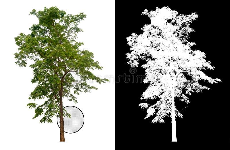 Ενιαίο δέντρο με το ψαλίδισμα της πορείας διανυσματική απεικόνιση