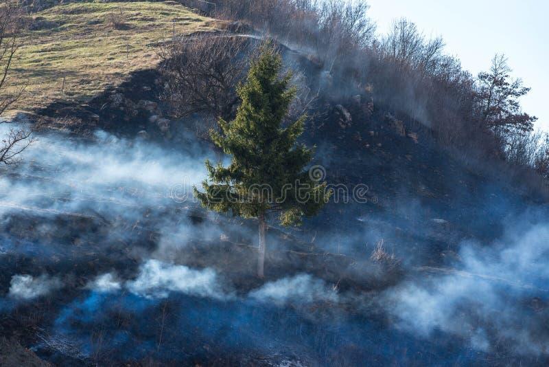 Ενιαίο δέντρο πεύκων στον πυκνό καπνό στο λόφο στοκ φωτογραφία