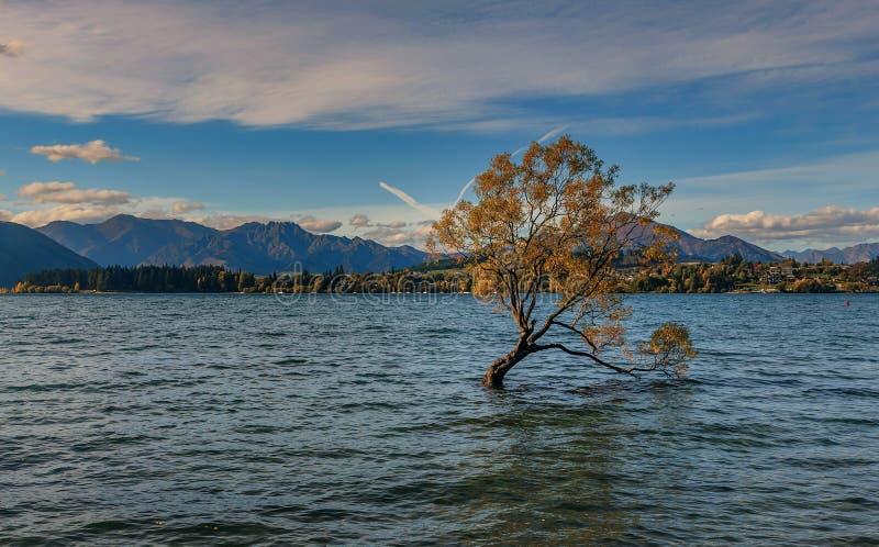 Ενιαίο δέντρο στο νερό λιμνών Wanaka στη Νέα Ζηλανδία στοκ φωτογραφίες