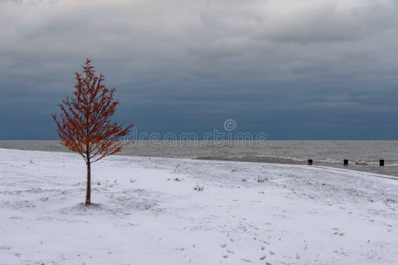 Ενιαίο δέντρο φθινοπώρου με το χιόνι και λίμνη Μίτσιγκαν στο Σικάγο στοκ φωτογραφίες