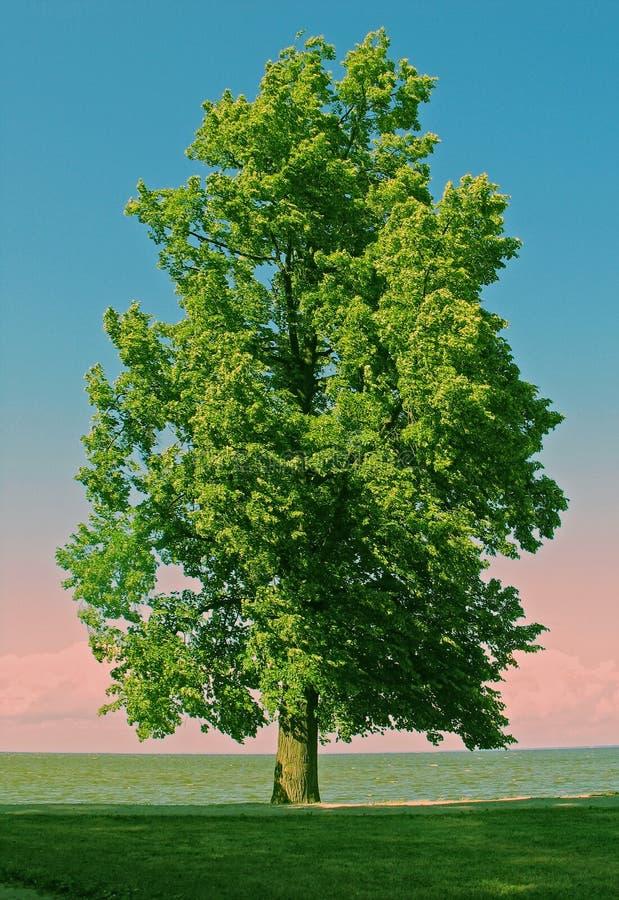 ενιαίο δέντρο στοκ εικόνα