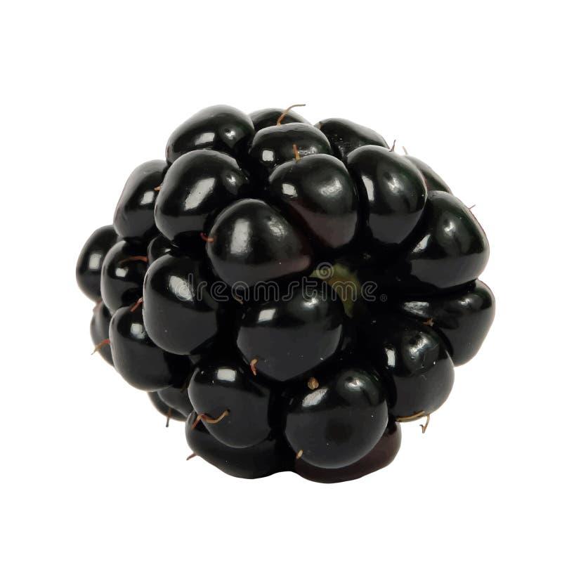 Ενιαίο διάνυσμα απεικόνισης του Blackberry στοκ φωτογραφία με δικαίωμα ελεύθερης χρήσης