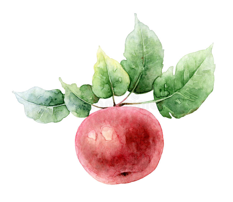 Ενιαίο κόκκινο μήλο watercolor διανυσματική απεικόνιση