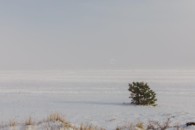 Ενιαίο παγωμένο δέντρο στο χιόνι fild στοκ φωτογραφία με δικαίωμα ελεύθερης χρήσης