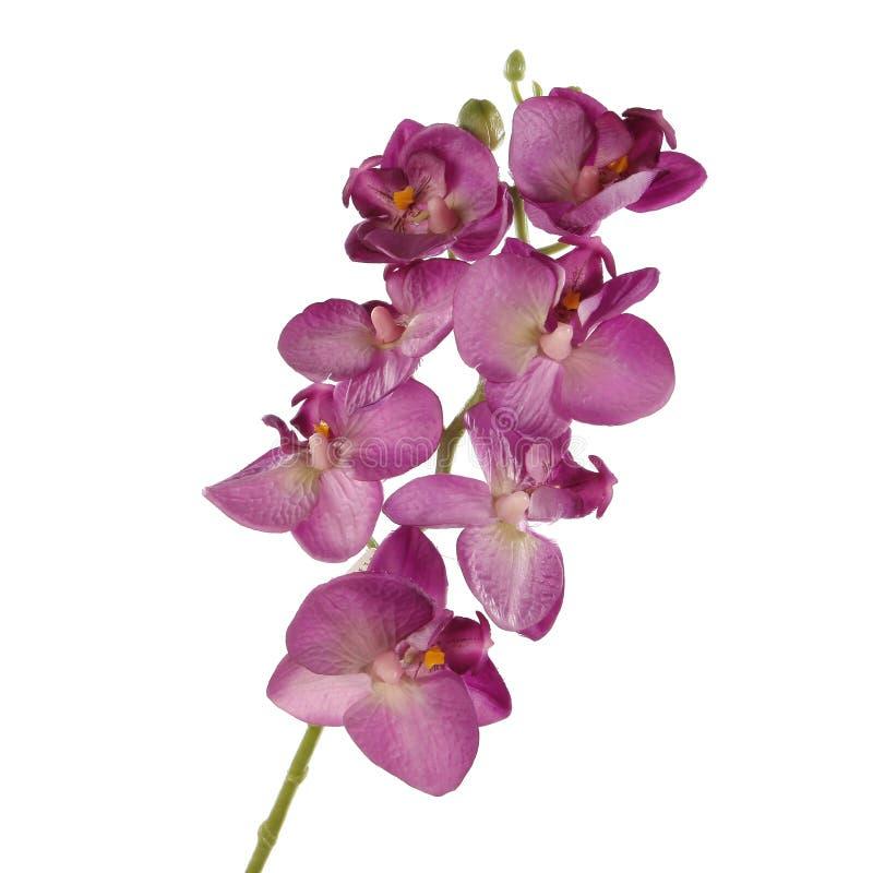 Ενιαίο ρόδινο Orchid που απομονώνεται στην άσπρη ανασκόπηση στοκ φωτογραφία με δικαίωμα ελεύθερης χρήσης
