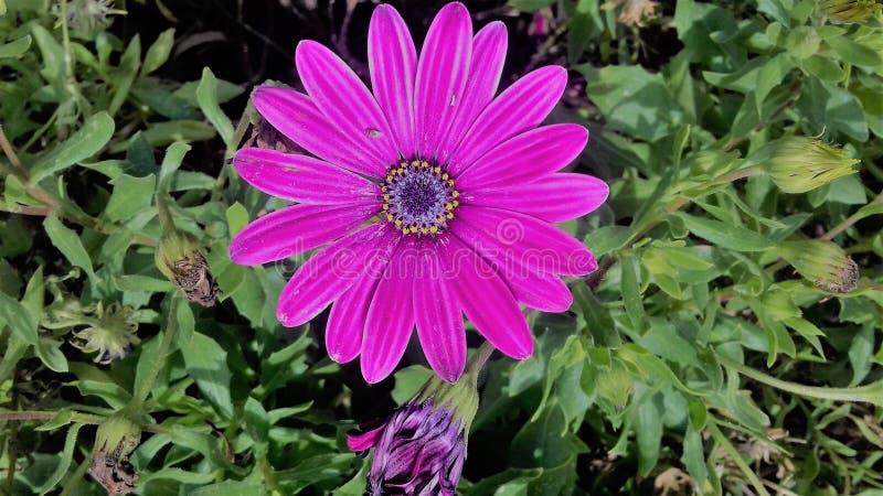Ενιαίο ρόδινο λουλούδι μεταξύ της πρασινάδας στοκ εικόνα με δικαίωμα ελεύθερης χρήσης
