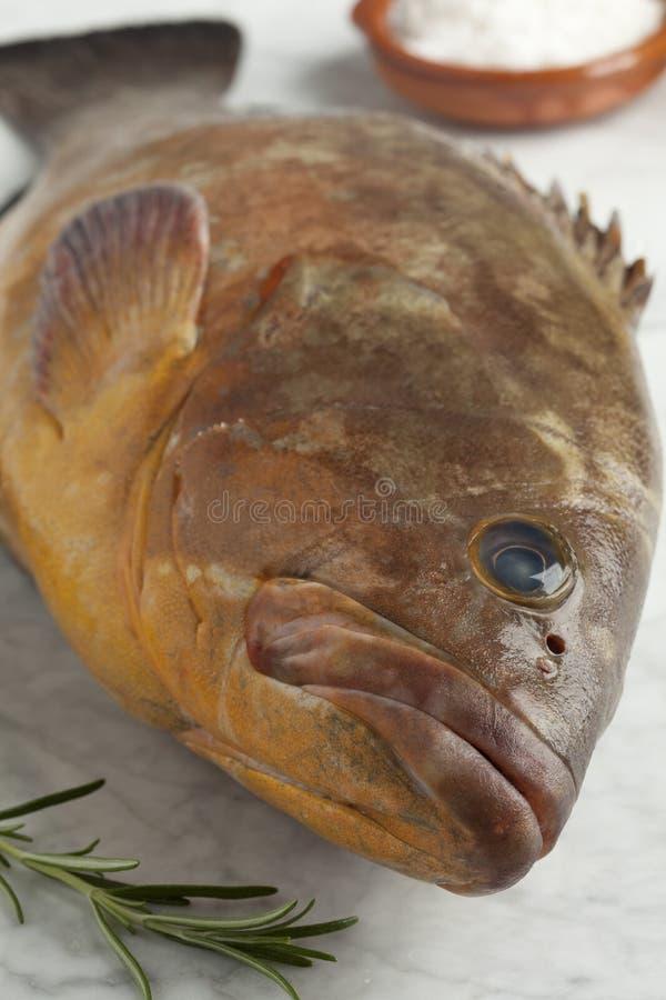 Ενιαίο φρέσκο ακατέργαστο σκοτεινό grouper στοκ φωτογραφία με δικαίωμα ελεύθερης χρήσης