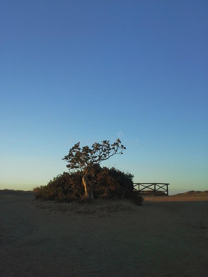 Ενιαίο silouette δέντρων σύκων κοντά στο falesia στοκ εικόνες με δικαίωμα ελεύθερης χρήσης
