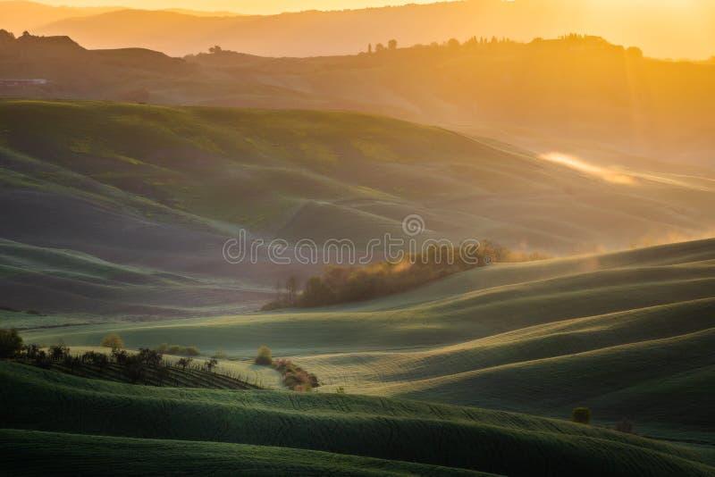 Εντυπωσιακό τοπίο άνοιξη, άποψη με τα κυπαρίσσια και τους αμπελώνες, Τοσκάνη, Ιταλία στοκ εικόνα