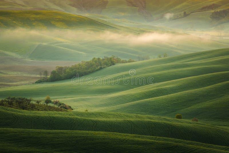 Εντυπωσιακό τοπίο άνοιξη, άποψη με τα κυπαρίσσια και τους αμπελώνες, Τοσκάνη, Ιταλία στοκ εικόνες με δικαίωμα ελεύθερης χρήσης