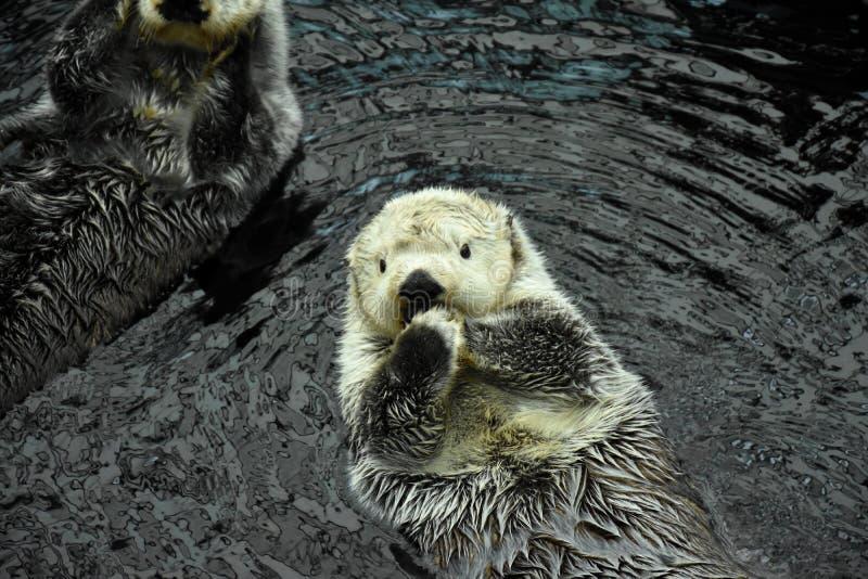 Ενυδρίδα θάλασσας στοκ φωτογραφία με δικαίωμα ελεύθερης χρήσης