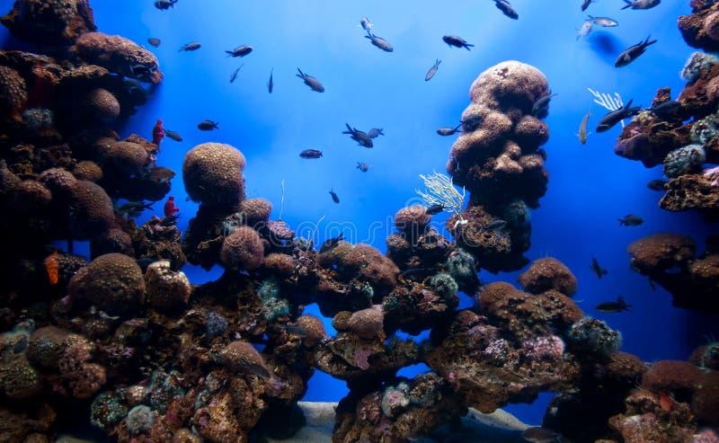 Ενυδρείο κοραλλιών στοκ εικόνα