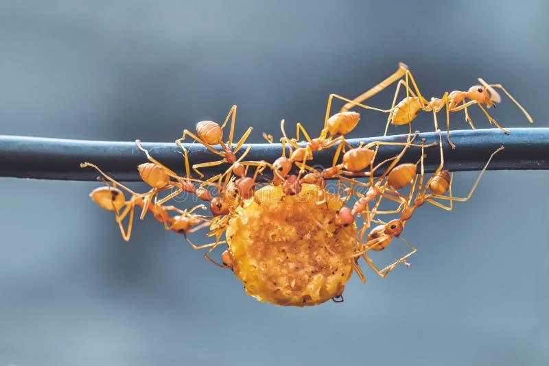 Ενότητα των μυρμηγκιών στοκ εικόνα με δικαίωμα ελεύθερης χρήσης