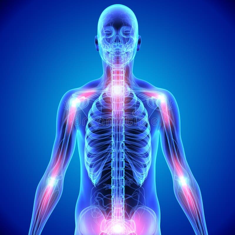 Ενώσεις κόκκαλων του σκελετού διανυσματική απεικόνιση