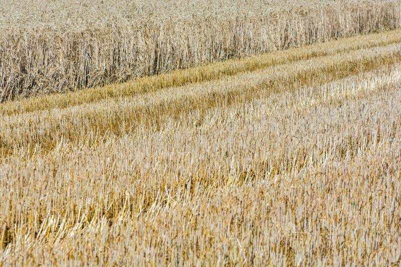 Εν μέρει συγκομισμένος τομέας δημητριακών στοκ φωτογραφία με δικαίωμα ελεύθερης χρήσης