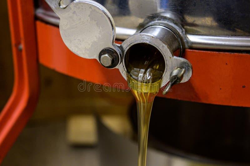 Εξάγοντας το μέλι, μέλι που ρέει έξω του φυγοκεντρωτή σε ένα κόσκινο που κρεμά σε έναν κάδο στοκ εικόνα με δικαίωμα ελεύθερης χρήσης