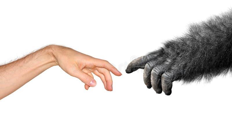 Εξέλιξη και έννοια προέλευσης στοκ φωτογραφία