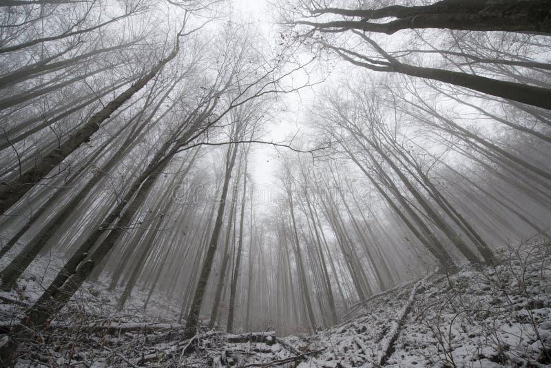 Εξαιρετικά ευρέα δέντρα γωνίας στοκ φωτογραφίες με δικαίωμα ελεύθερης χρήσης