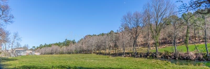 Εξαιρετικά πανοραμική άποψη, αγροτική χλόη, κοντά στον ποταμό με τα παράλληλα δέντρα στοκ φωτογραφίες
