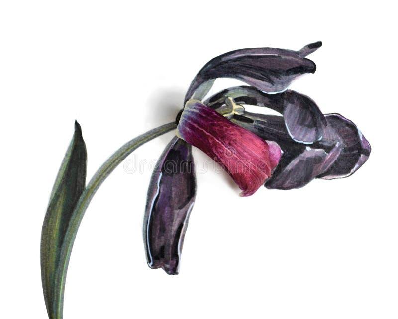 Εξασθένιση λουλουδιών τουλιπών απεικόνιση αποθεμάτων