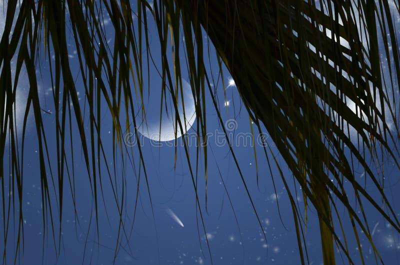 Εξασθενίζοντας φεγγάρι και φωτεινά αστέρια στην κουρτίνα φύλλων στη νύχτα στοκ φωτογραφίες με δικαίωμα ελεύθερης χρήσης