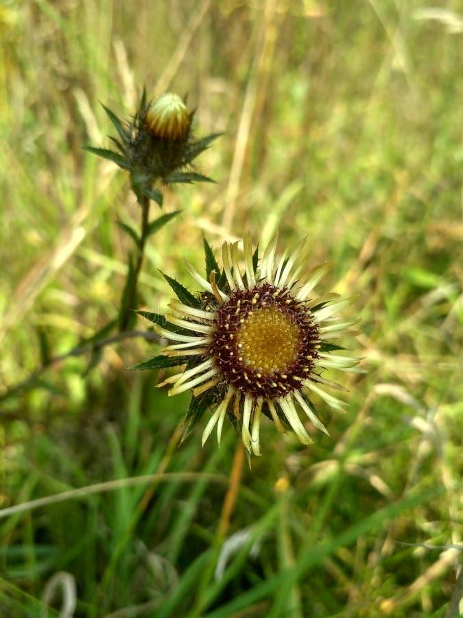 εξασθενισμένα λουλούδ&i στοκ εικόνες