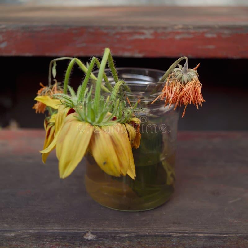 Εξασθενισμένα φθινόπωρο λουλούδια σε ένα ja στοκ φωτογραφία με δικαίωμα ελεύθερης χρήσης