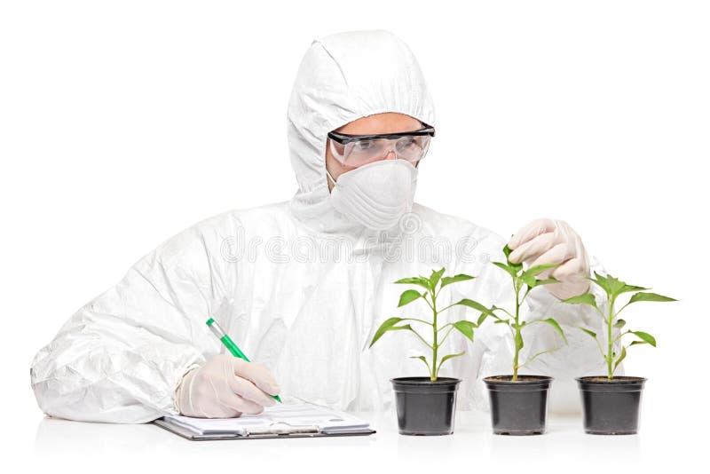 εξετάζοντας το φυτό πιπε&rh στοκ εικόνα με δικαίωμα ελεύθερης χρήσης