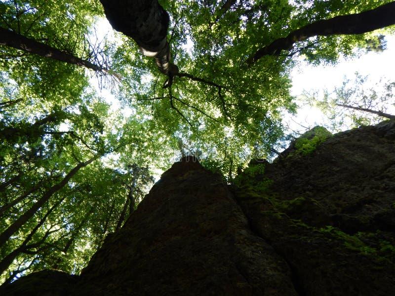 Εξετάστε επάνω τον απότομο βράχο βράχου στο δάσος στοκ φωτογραφίες