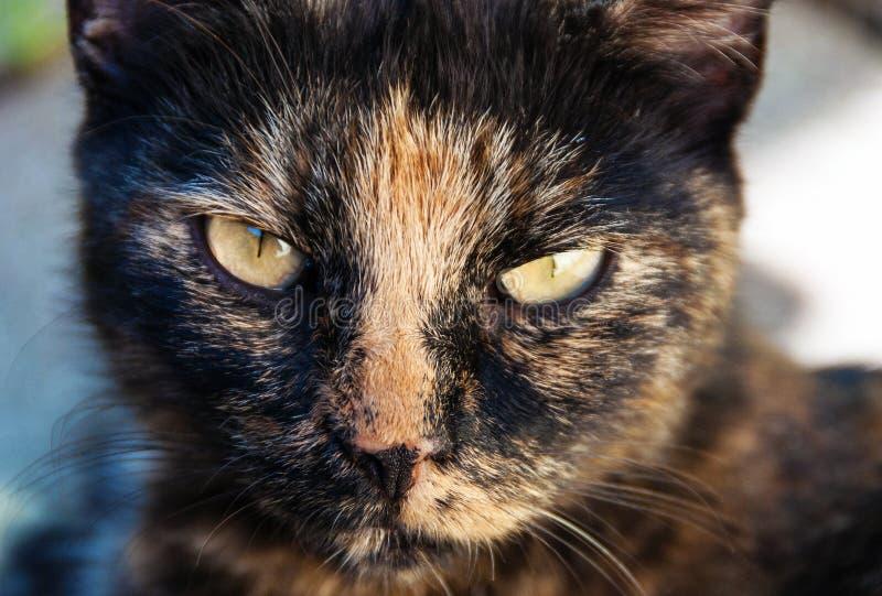Εξετάστε τα μάτια μιας γάτας στοκ εικόνες με δικαίωμα ελεύθερης χρήσης