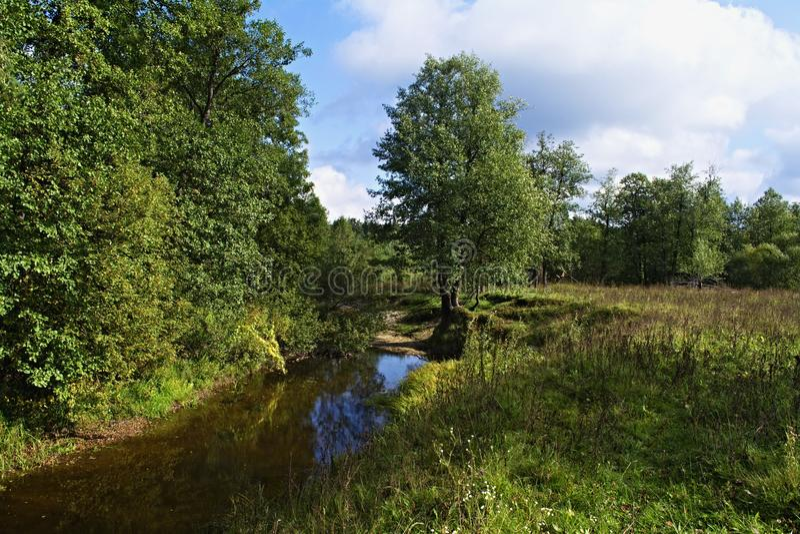 Εξετάστε τη μόνη στάση δέντρων στοκ εικόνα με δικαίωμα ελεύθερης χρήσης