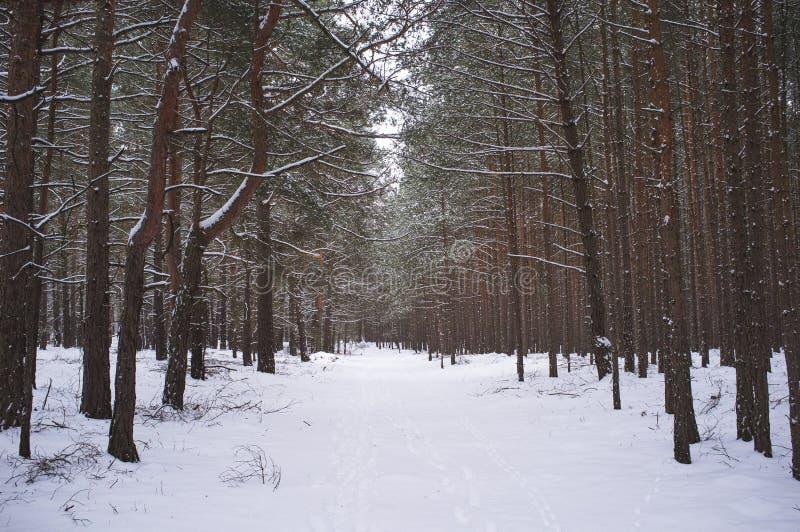 Εξετάστε το χειμερινό δάσος στοκ εικόνες με δικαίωμα ελεύθερης χρήσης