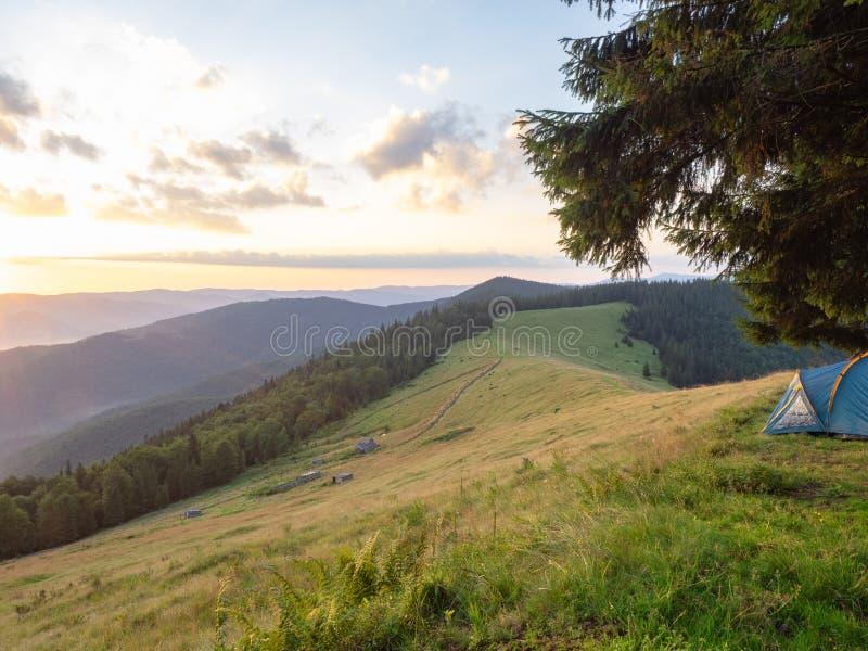 Εξισώνοντας Carpathians στα βουνά στο καλοκαίρι, δυτική Ουκρανία Μπλε τουριστική σκηνή κάτω από το έλατο Βουνοπλαγιές που καλύπτο στοκ φωτογραφία