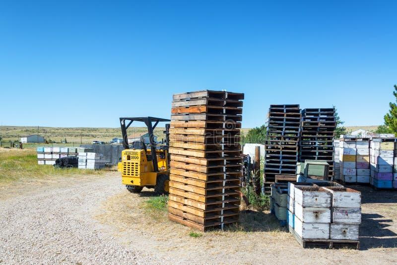 Εξοπλισμός μελισσοκομίας στοκ εικόνες
