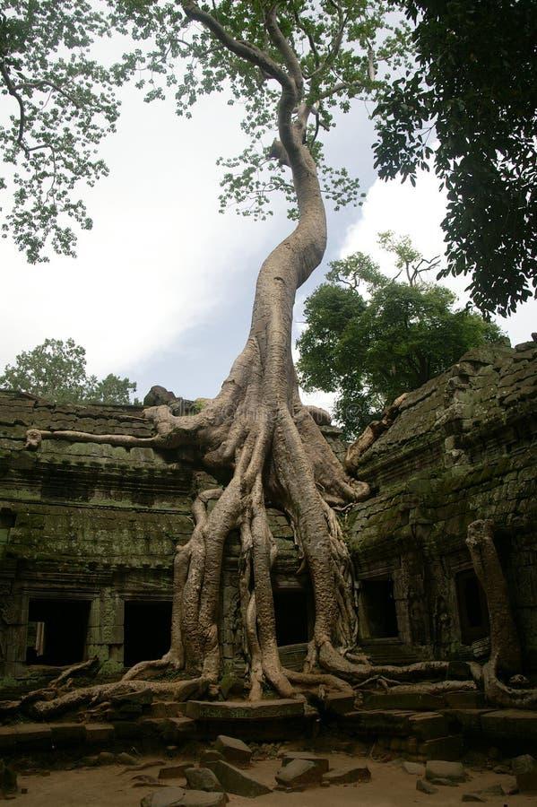 εξουσιάστε prohm τα δέντρα TA στοκ φωτογραφίες