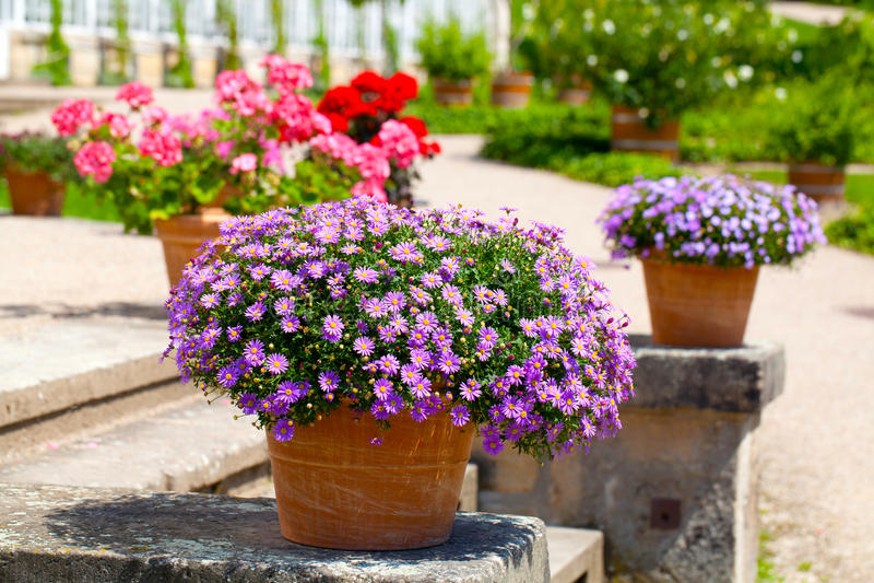 Εξωραϊσμένος κήπος λουλουδιών στοκ φωτογραφίες με δικαίωμα ελεύθερης χρήσης