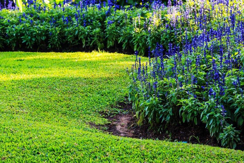Εξωραϊσμός στον κήπο στοκ εικόνα με δικαίωμα ελεύθερης χρήσης
