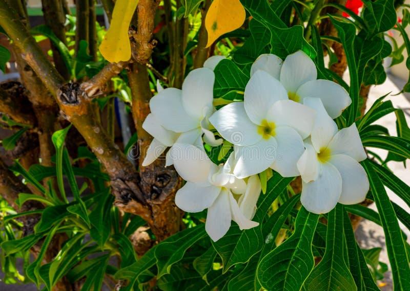 Εξωτικά θερινά τροπικά λουλούδια στοκ φωτογραφία